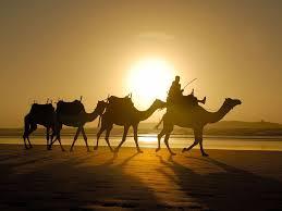 camelos