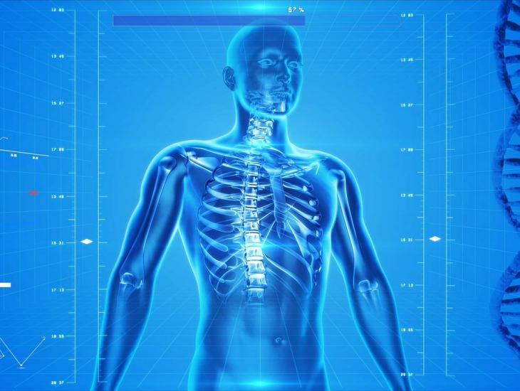 Fonte: https://pixabay.com/illustrations/human-skeleton-human-body-anatomy-163715