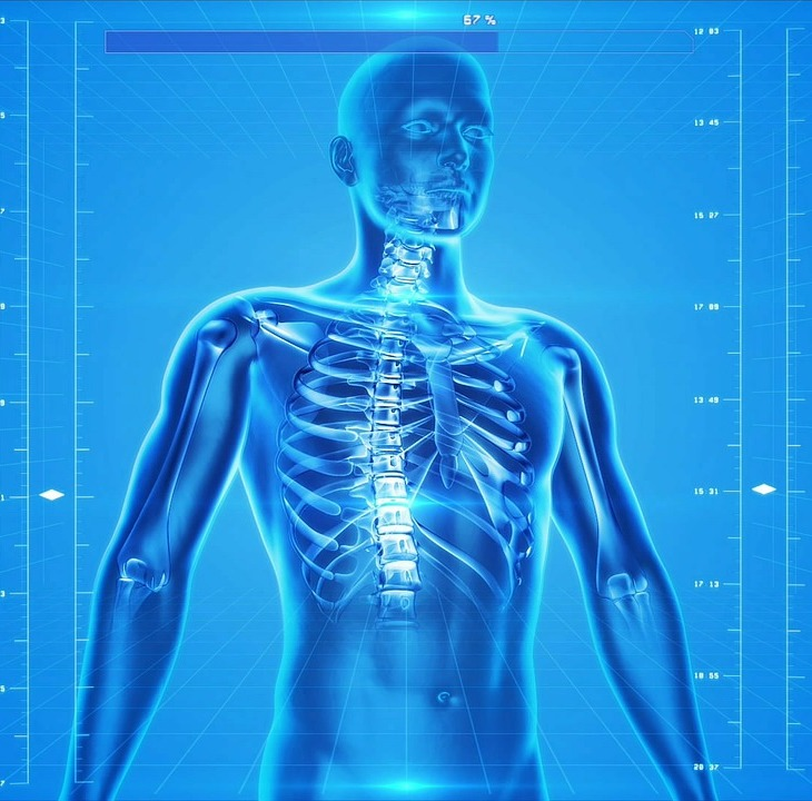 Fonte: https://pixabay.com/illustrations/human-skeleton-human-body-anatomy-163715
