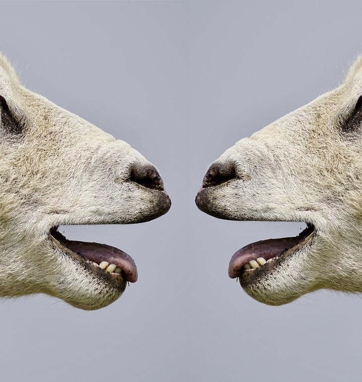 https://pixabay.com/pt/photos/ovinos-balir-comunica%C3%A7%C3%A3o-2372148/