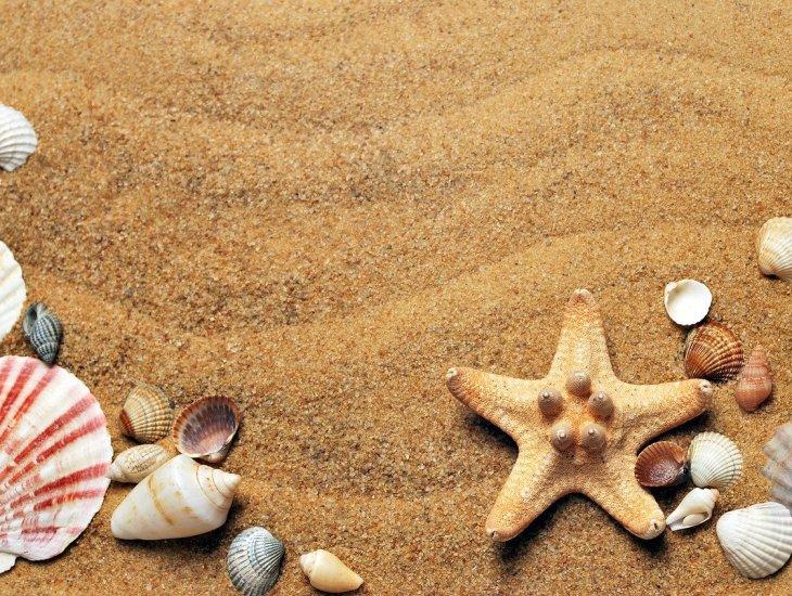 https://pixabay.com/pt/photos/mar-areia-costa-praia-conchas-1337565/