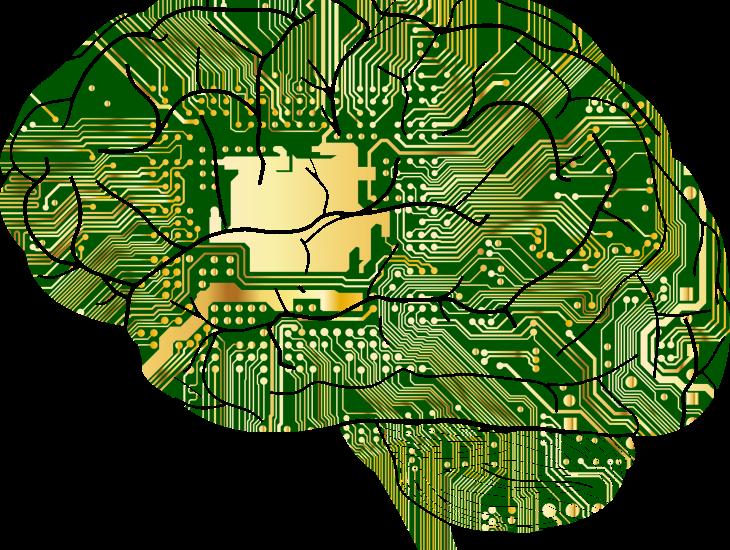 https://pixabay.com/pt/vectors/anatomia-biologia-c%C3%A9rebro-1751201/